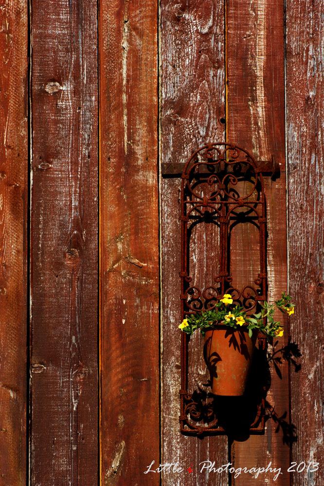 Old barn door... by davecarter754