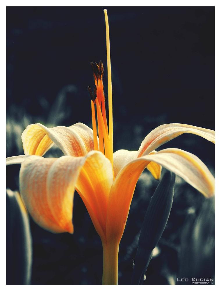 Flower Colours.jpg by leokurian18