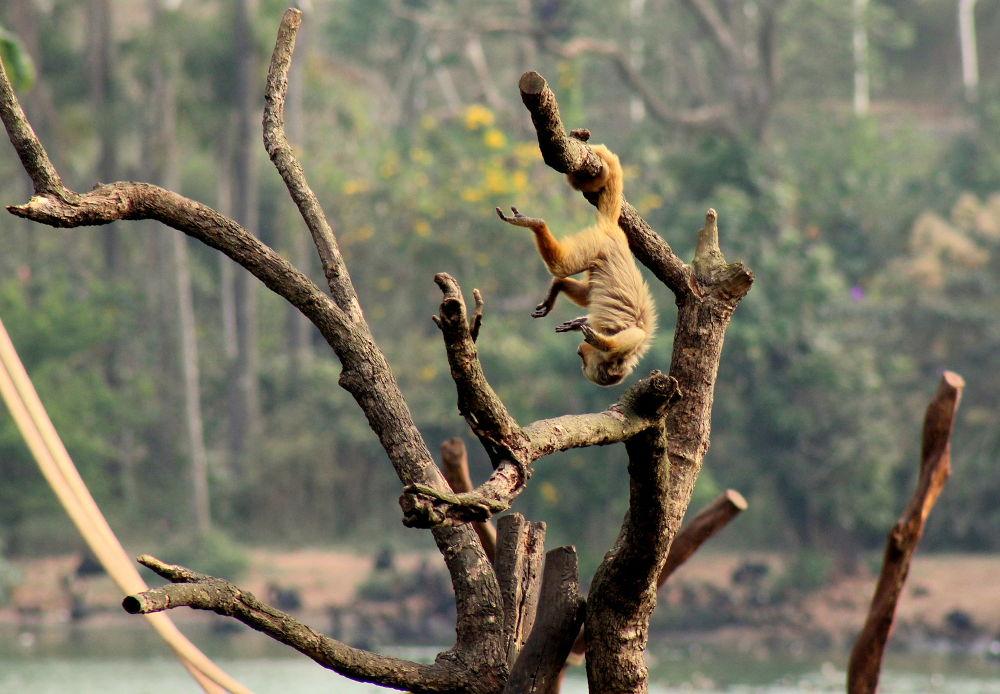 Monkey Business  by MihaJurca