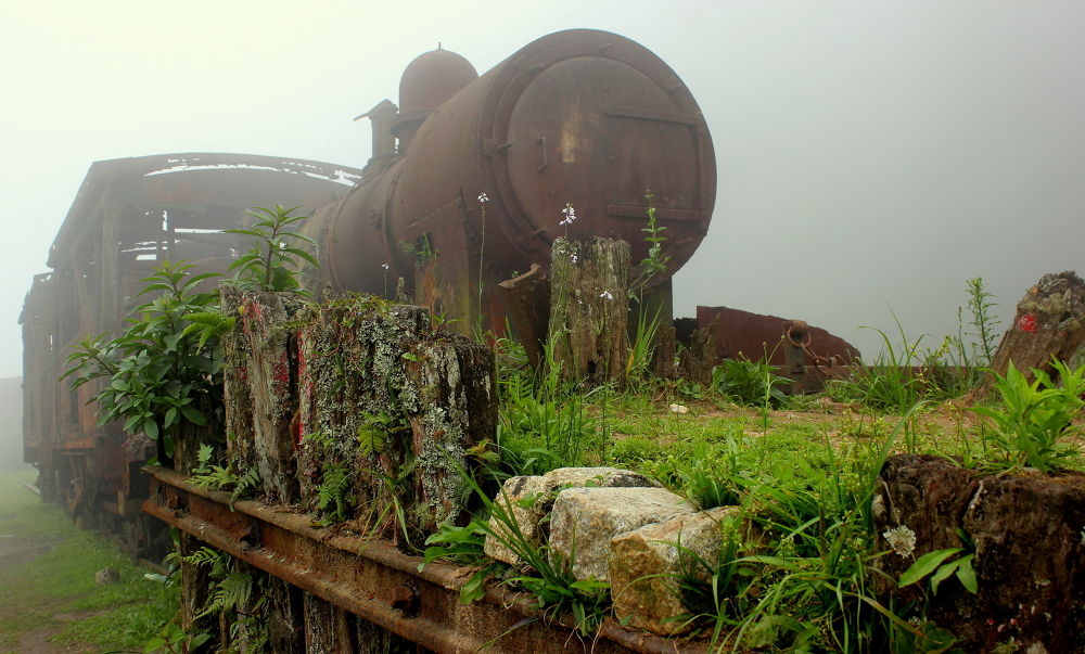 Lost in the Fog by MihaJurca