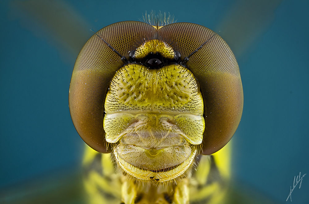DragonFly portrait by PauloLataes