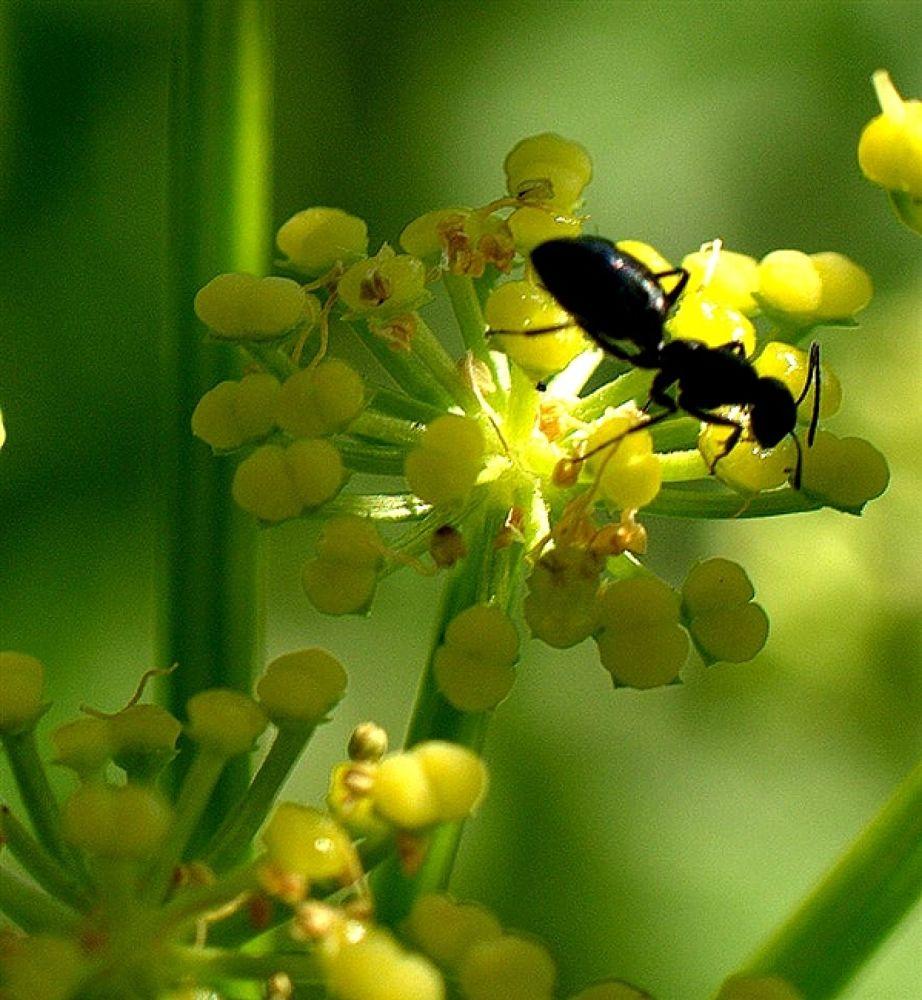 karınca by akinbilman
