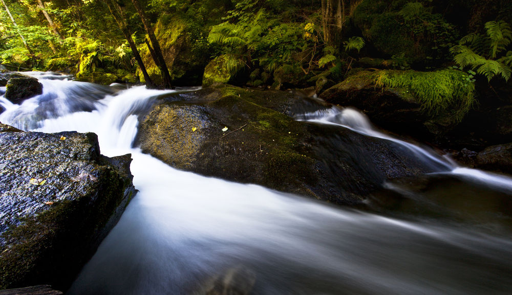 Photo in Landscape #water #forest #long esposure