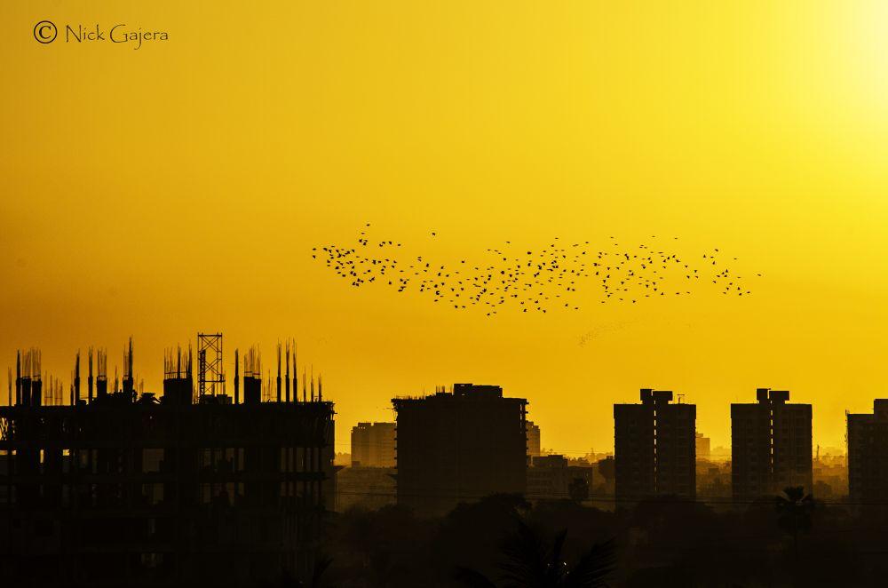 Lost In urbanlife by nickgajera9