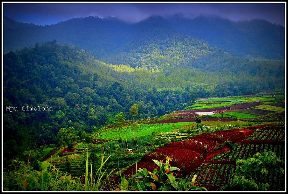 fields by irawandicandra