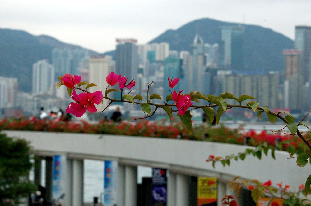 HongKong by Afshin