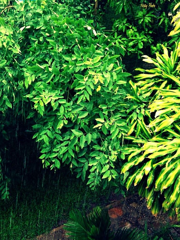 Rain and trees  by PKAY NISAY