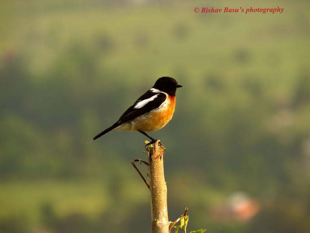 Standing tall by Rishav Basu