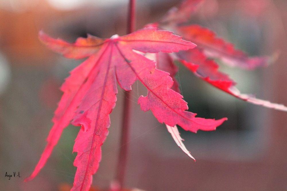 Autumn by ladyanjavl