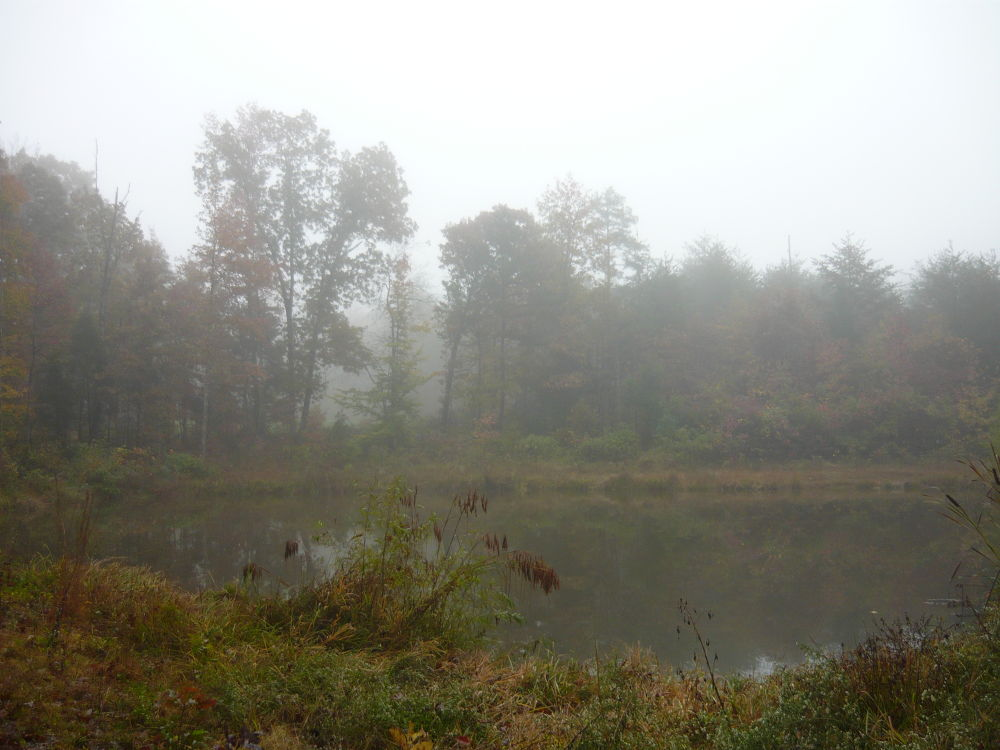 Pond in the Fog by kgoodstrings