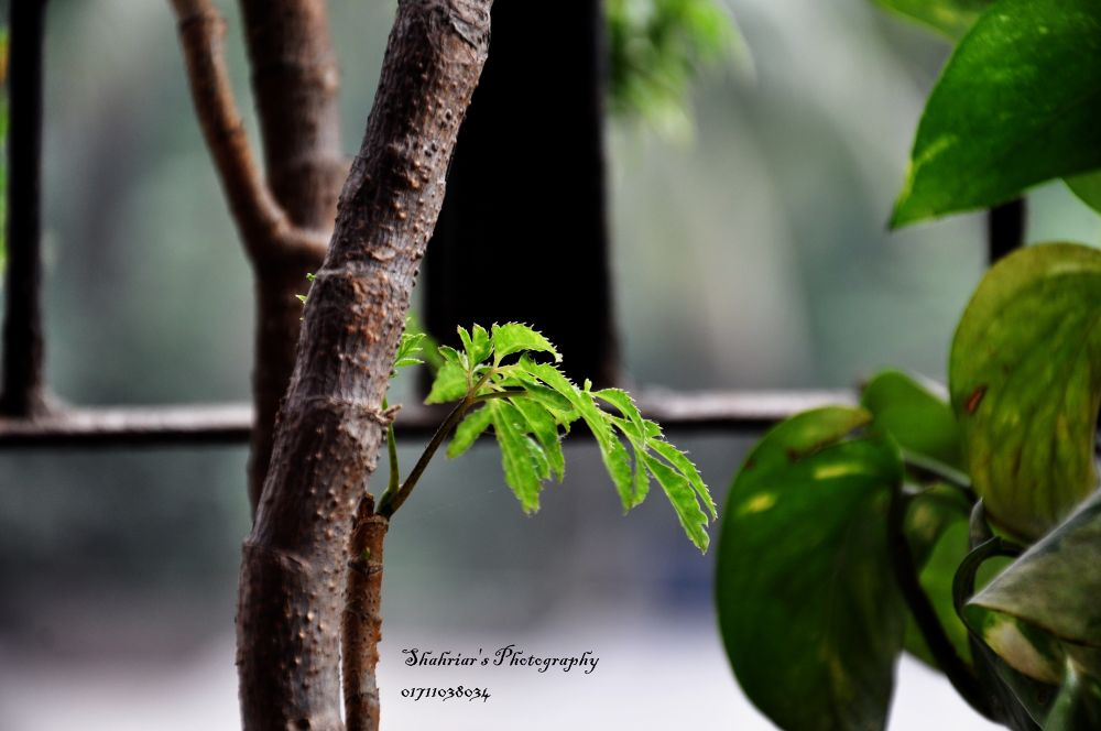 nobin 1.jpg by Shahriar Ahmed Tusher