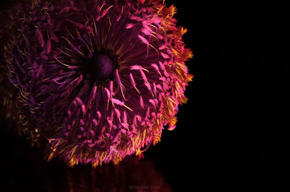 flower study.jpg by helenesmit88