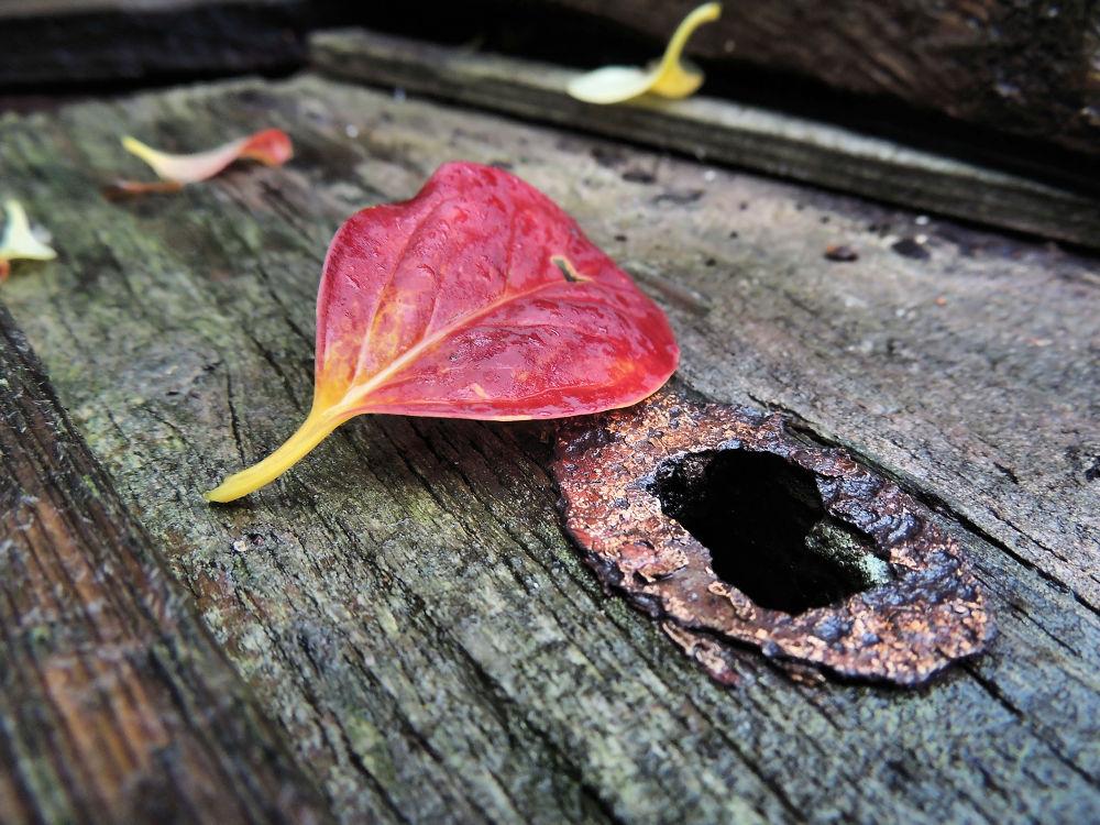 024 (3)Herbst by heikoscharf