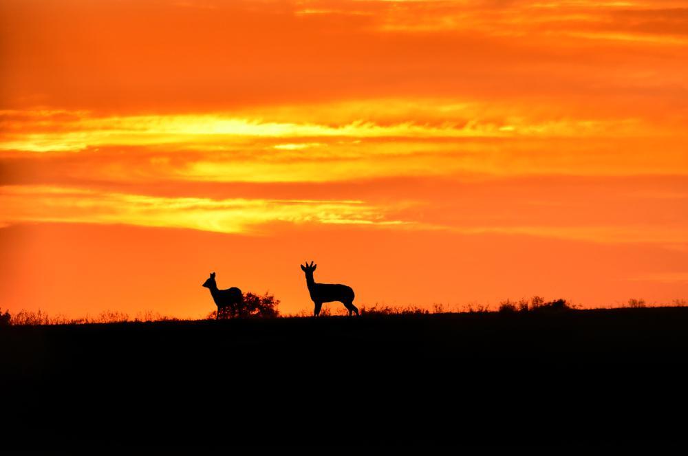 Bambi by heikoscharf