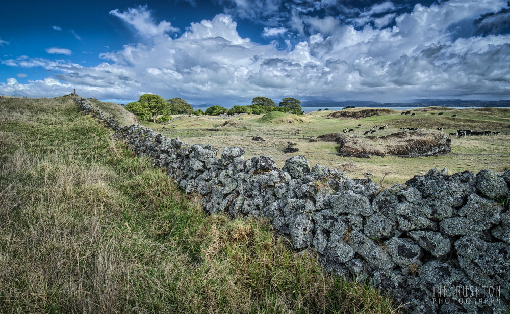 Photo in Random #stonefields #stone #wall #auckland #fields #cows #grass