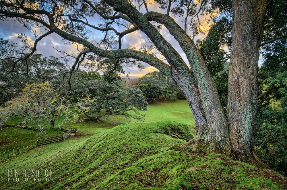 Photo in Random #field #grass #trees #paddock #auckland #fence