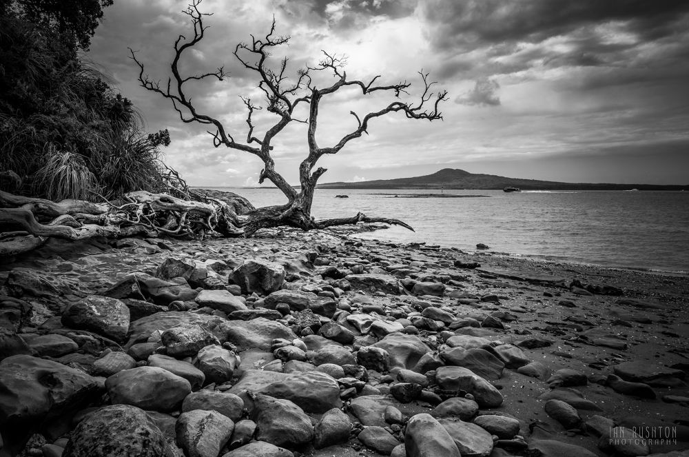 Dead Tree by Ian Rushton
