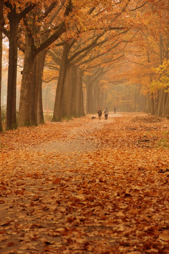 Autumn walk!_7575 by ellyhagens1