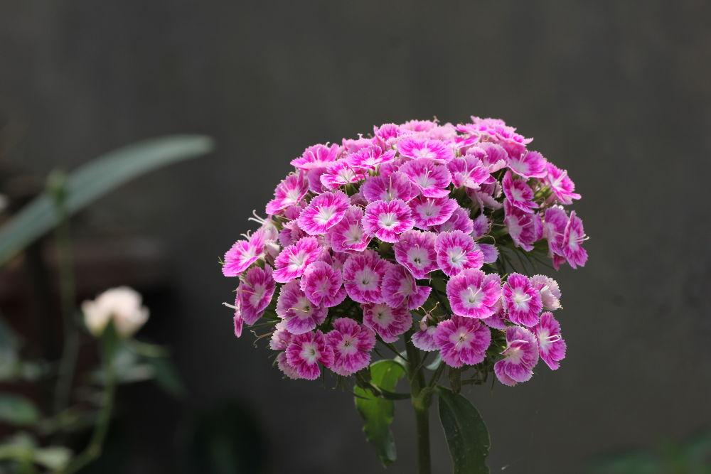 winter flower by mohanburagohain