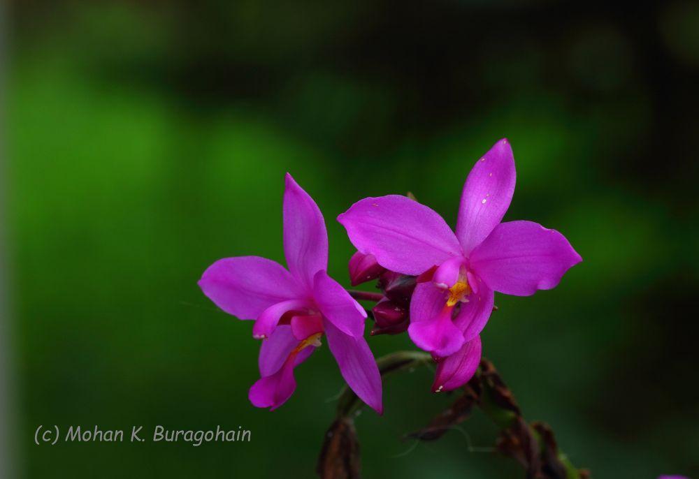 Photo in Random #nature #flower