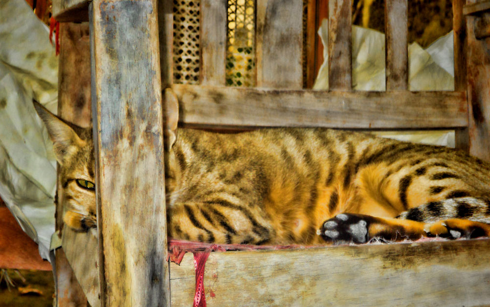 CAT by shakeelbaloch56