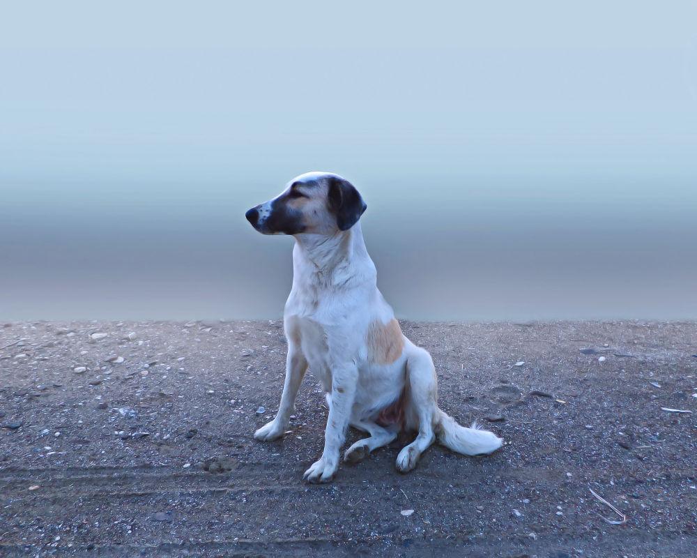 street dog by shakeelbaloch56