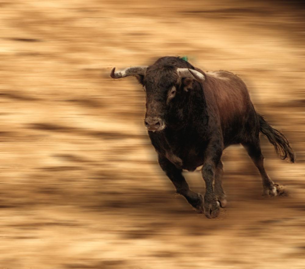 Toro bravo by lolacamachotroyano