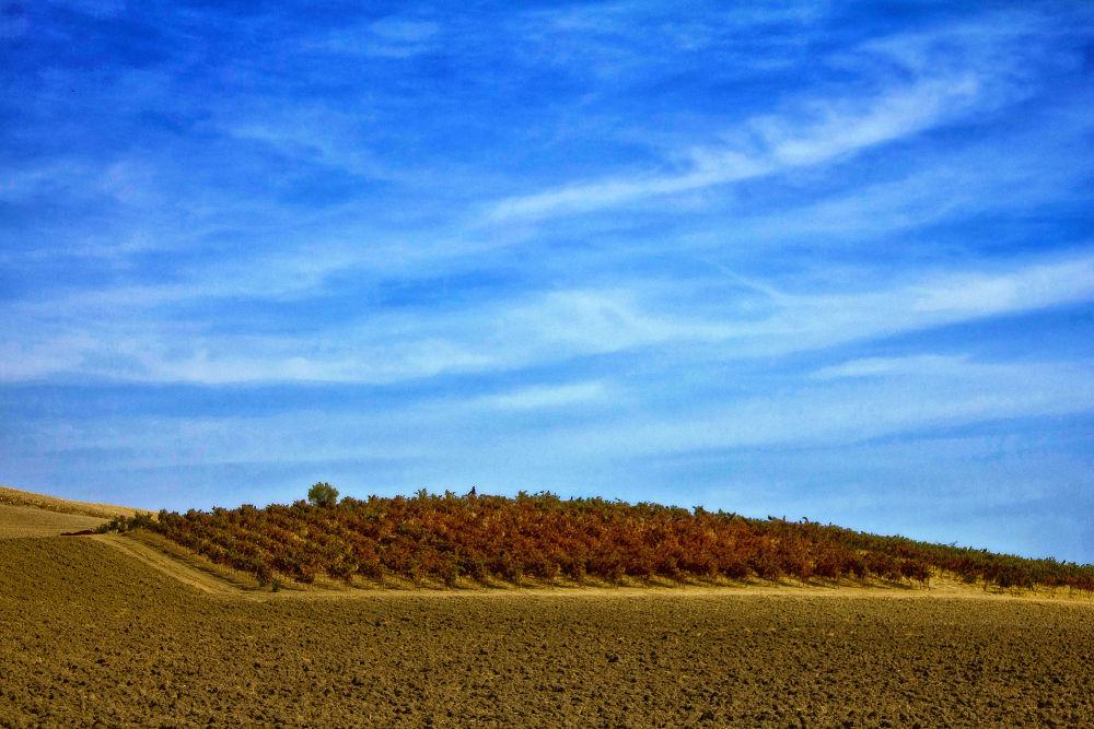 Por los campos de mi Andalucía III by lolacamachotroyano