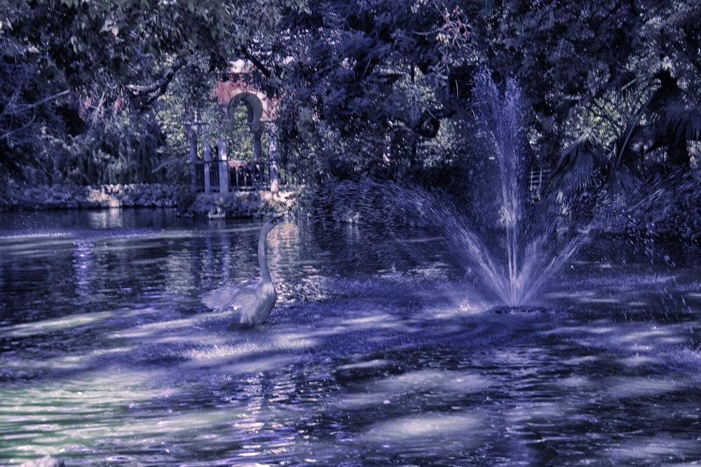 El estanque de los cisnes by lolacamachotroyano