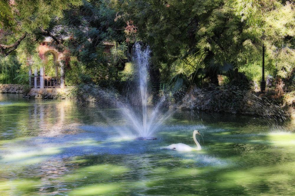 El estanque de los cisnesII by lolacamachotroyano