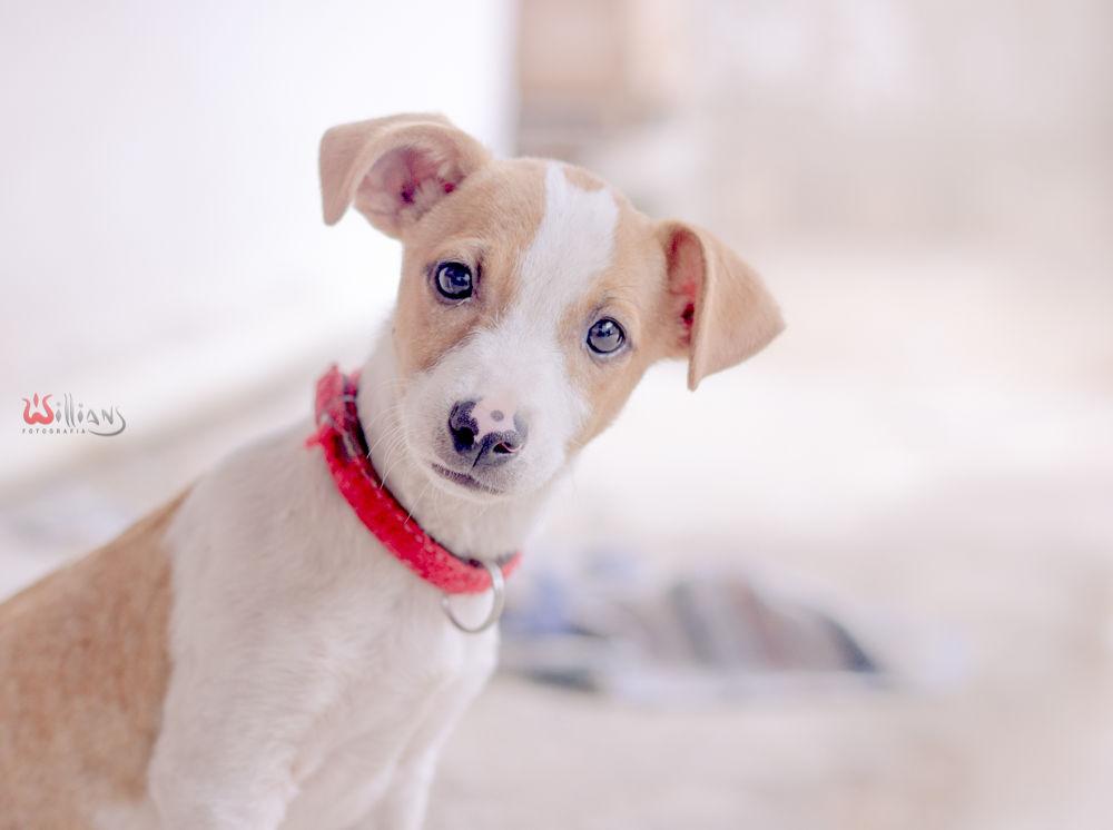 A cute dog by willianssouza3139