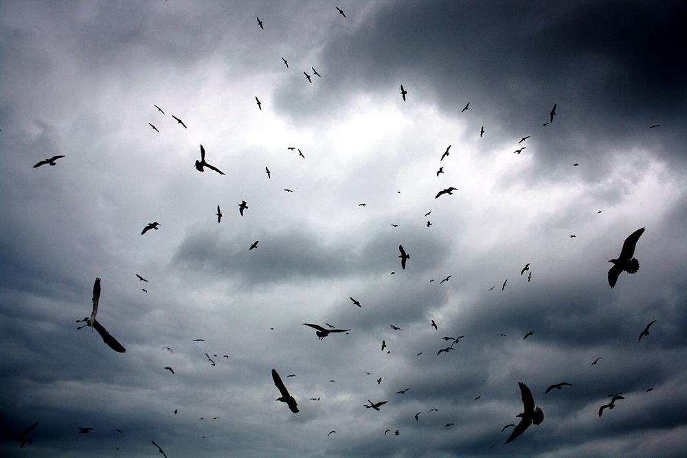 birds copyweb.JPG by hamidboutayeb56