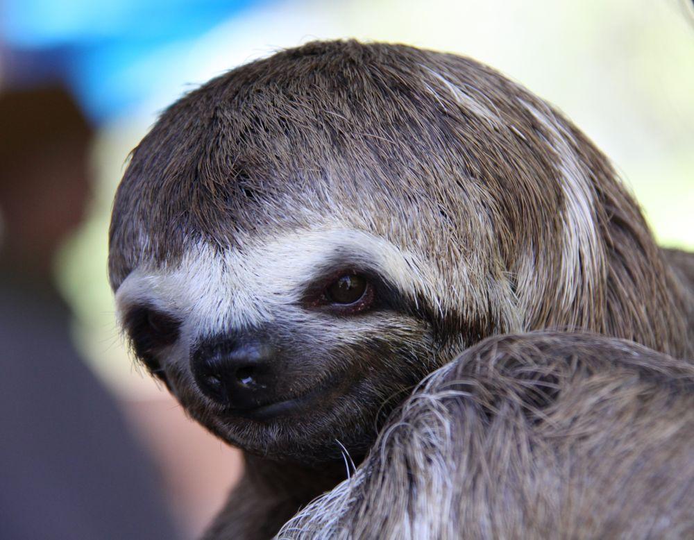 Sloth by sudeepb