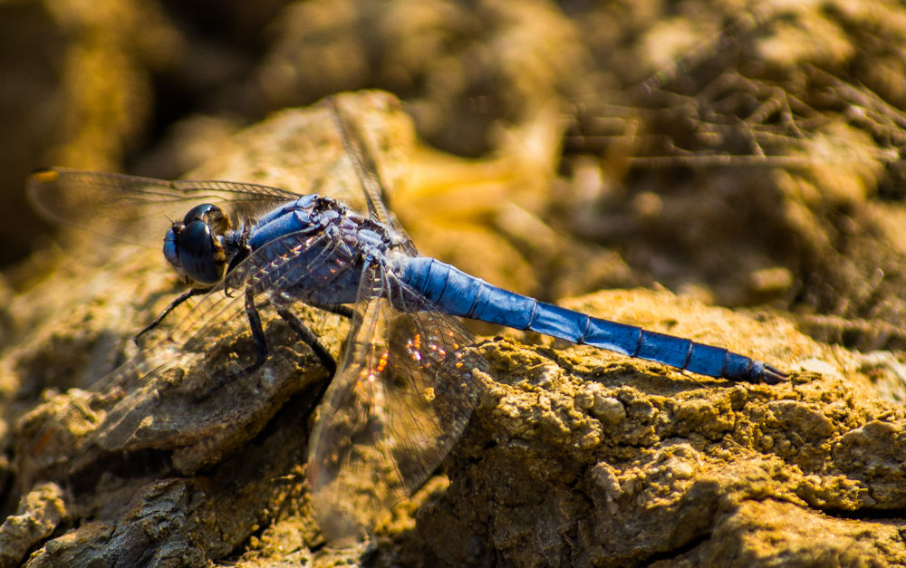 Dragonfly 3 by derrymaine14