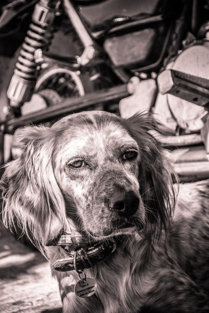 Thales wondering by derrymaine14