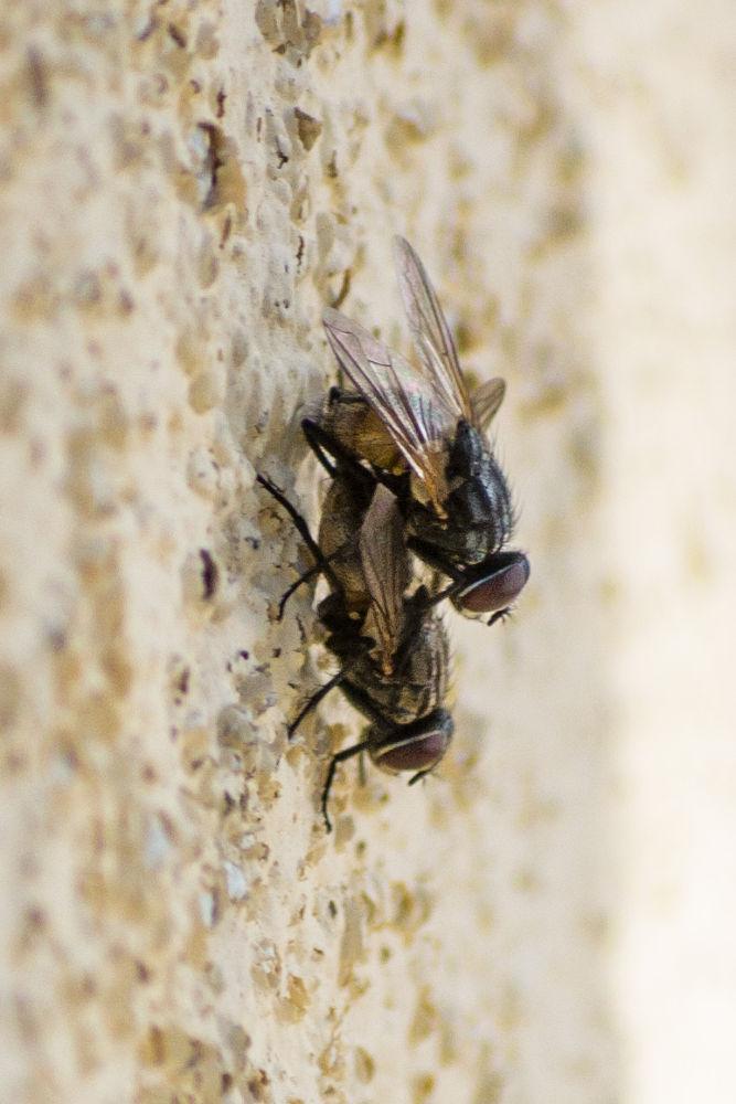 Flies by derrymaine14