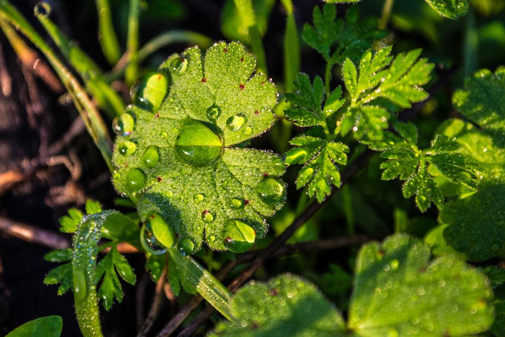 Dewdrops by derrymaine14