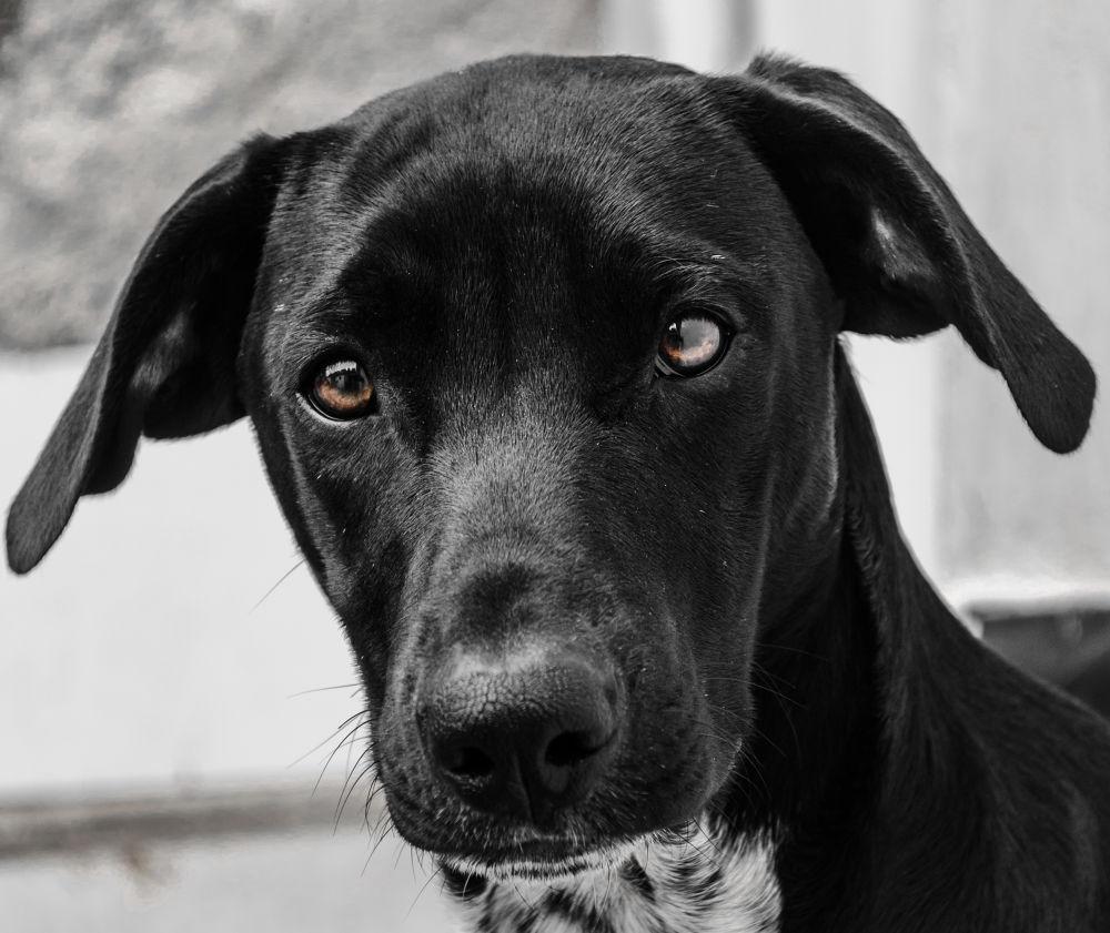 Photo in Animal #dog #brasil #minas gerais #nikon #barney