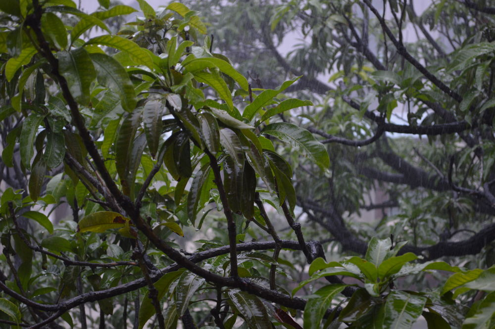 The Indian Monsoon by kausikm