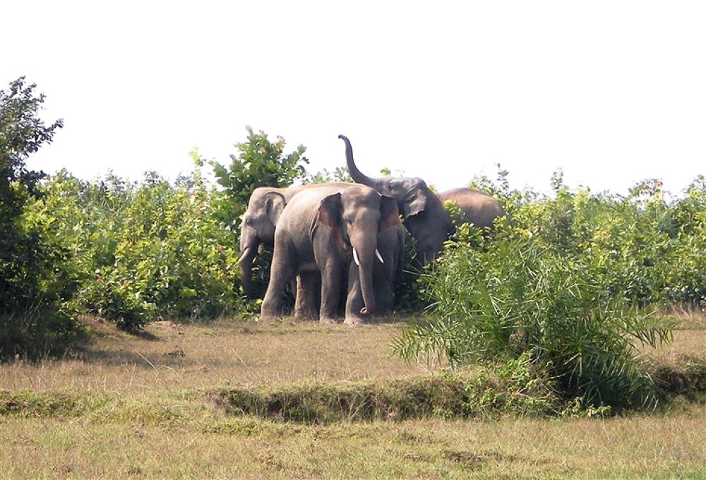 Sankrail Elephant herd 006 by milan