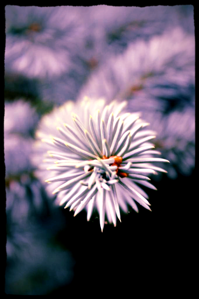 canvasjnoij-jo[okm[p.png by TaralynSawyerPhotography