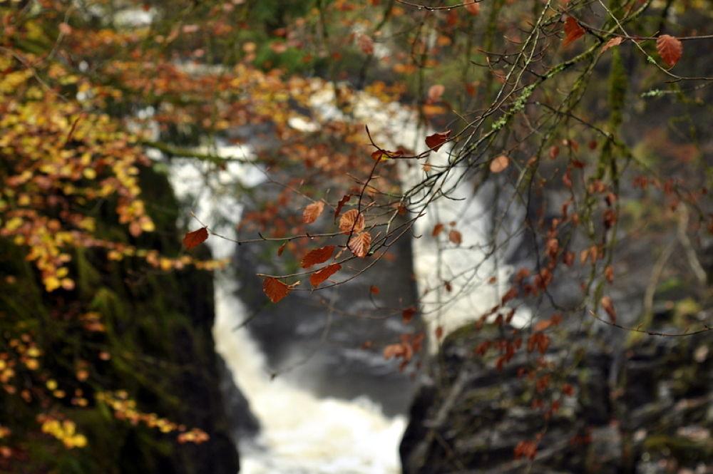 Autumn  by Bruce Summerton