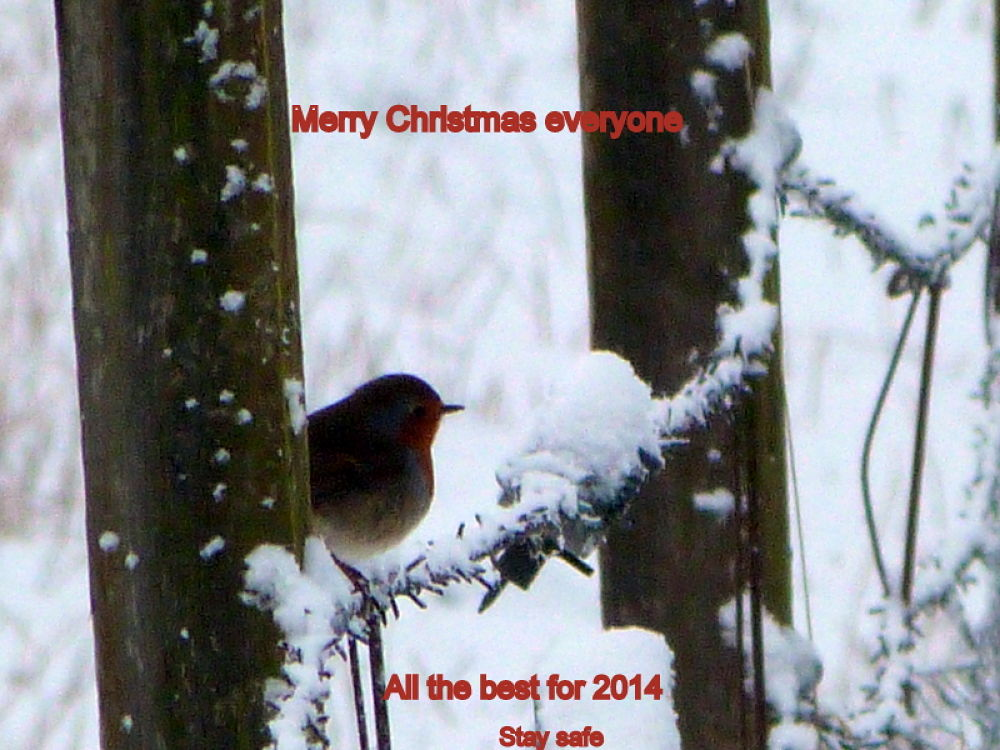 Happy holidays  by Bruce Summerton