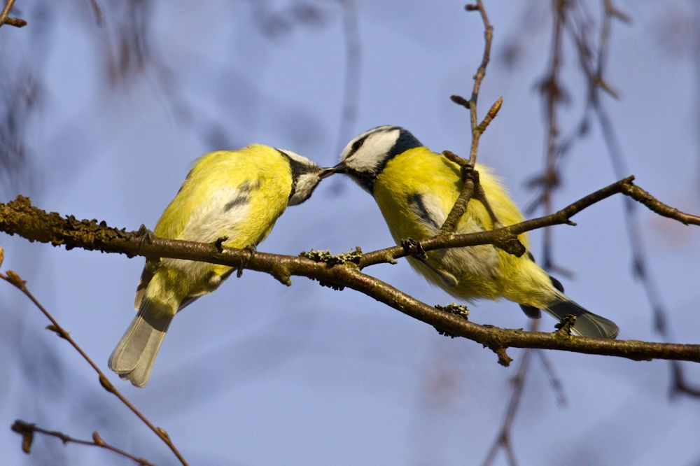 love is in the air.... by pysen