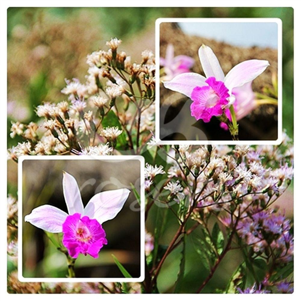 orquídeas by rosers