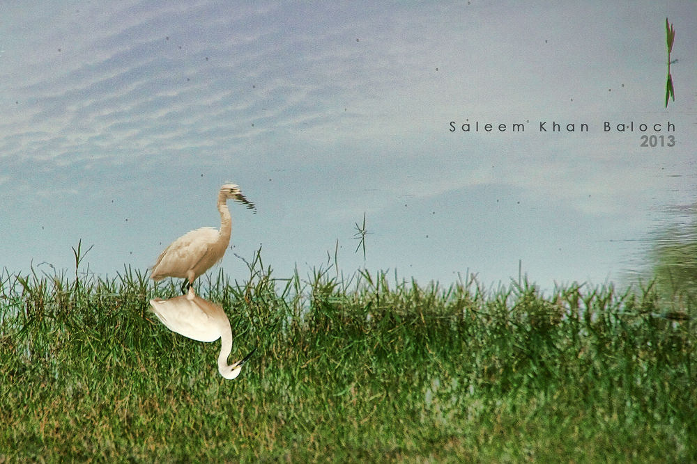 saleem khan baloch (47).jpg by saleemkb