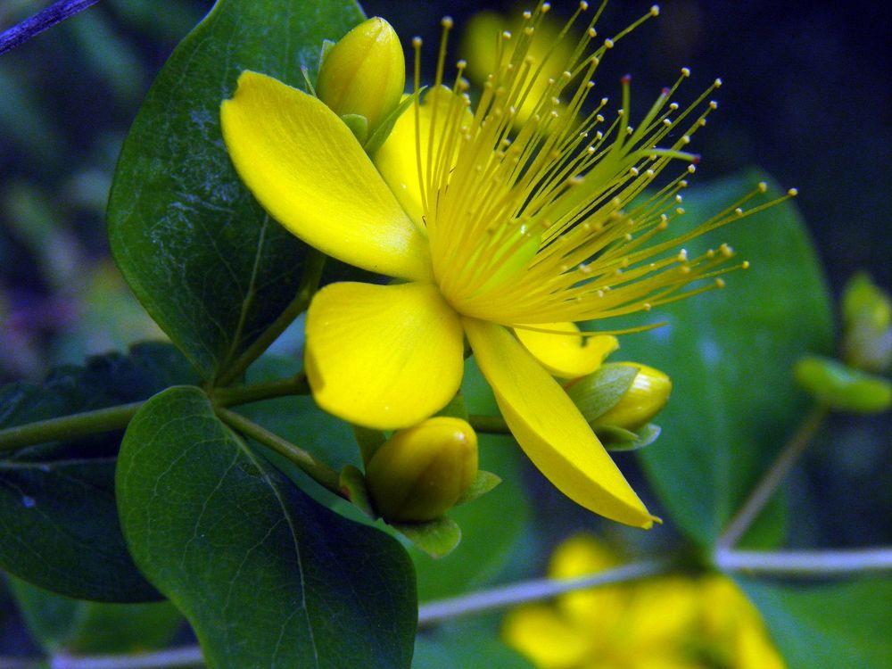 fiore 8 SW by valtersaracchi