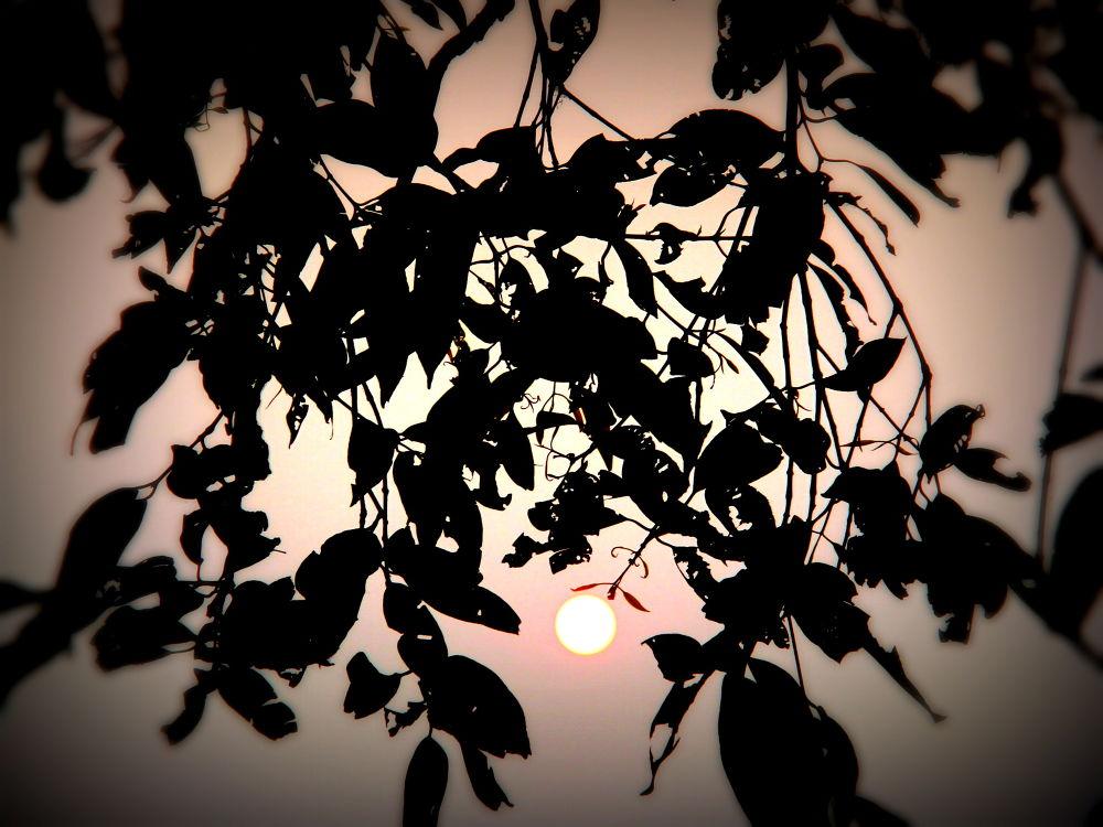 sunrise by rajib saha