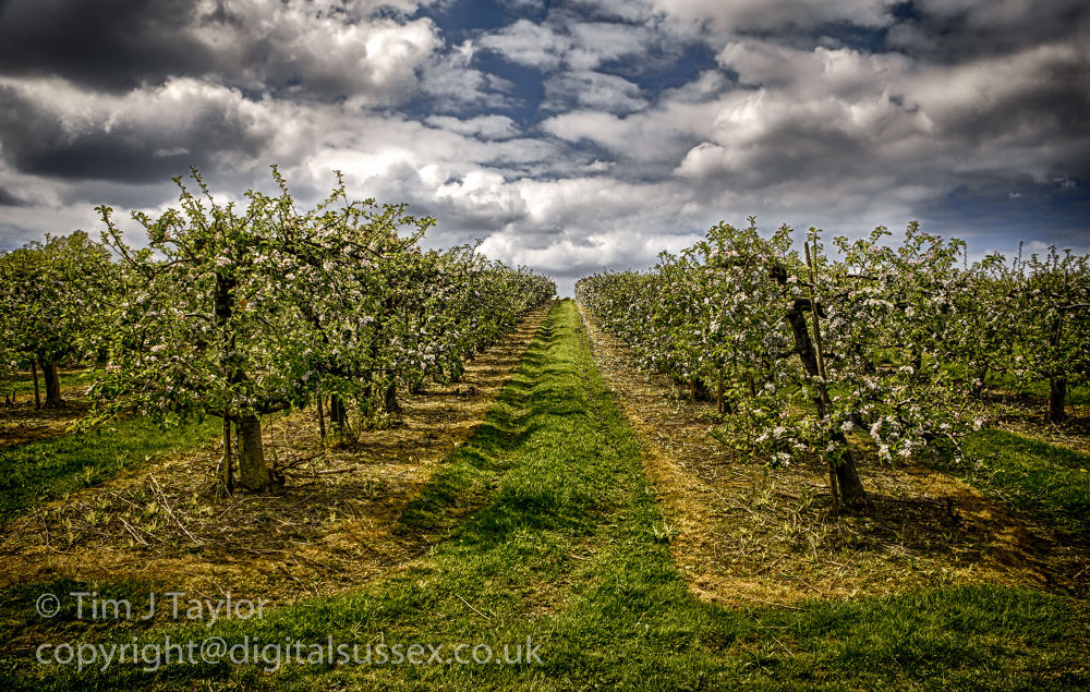 Through the orchard.jpg by DigitalSussex