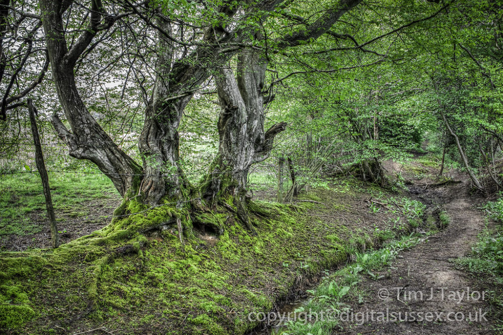 Moss Covered Roots.jpg by DigitalSussex